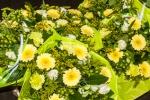 33-De bloemen.jpg